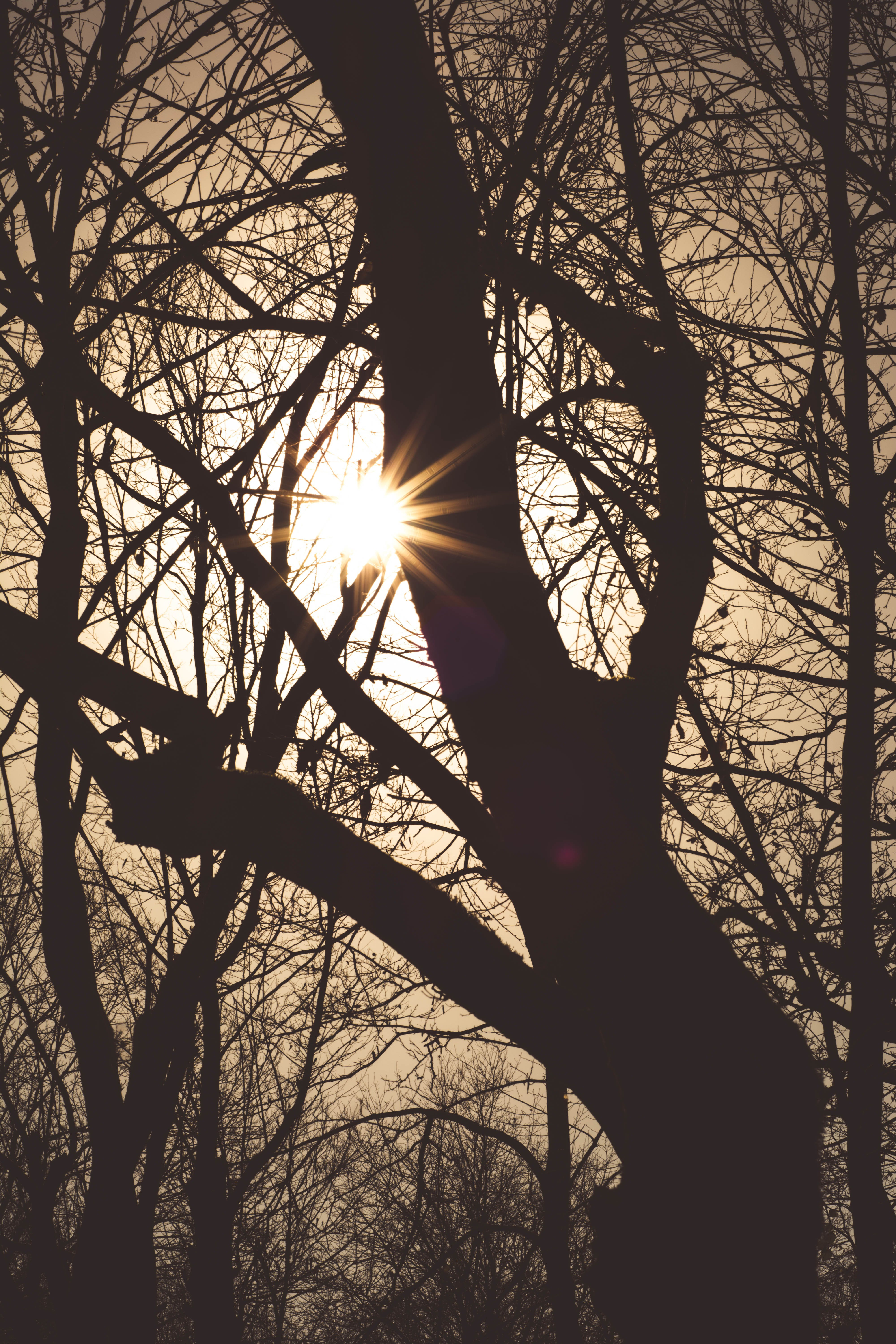 Free stock photo of nature, outdoor, sun, tree