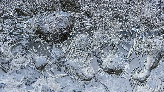 Free stock photo of cold, winter, ice, macro