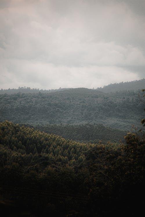 Free stock photo of dawn, fog, hill