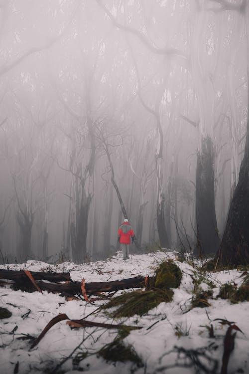@戶外, 下雪的, 亞拉 的 免費圖庫相片