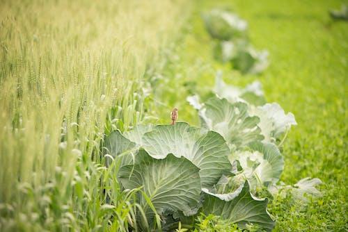 Základová fotografie zdarma na téma denní světlo, drobný, farma, hřiště