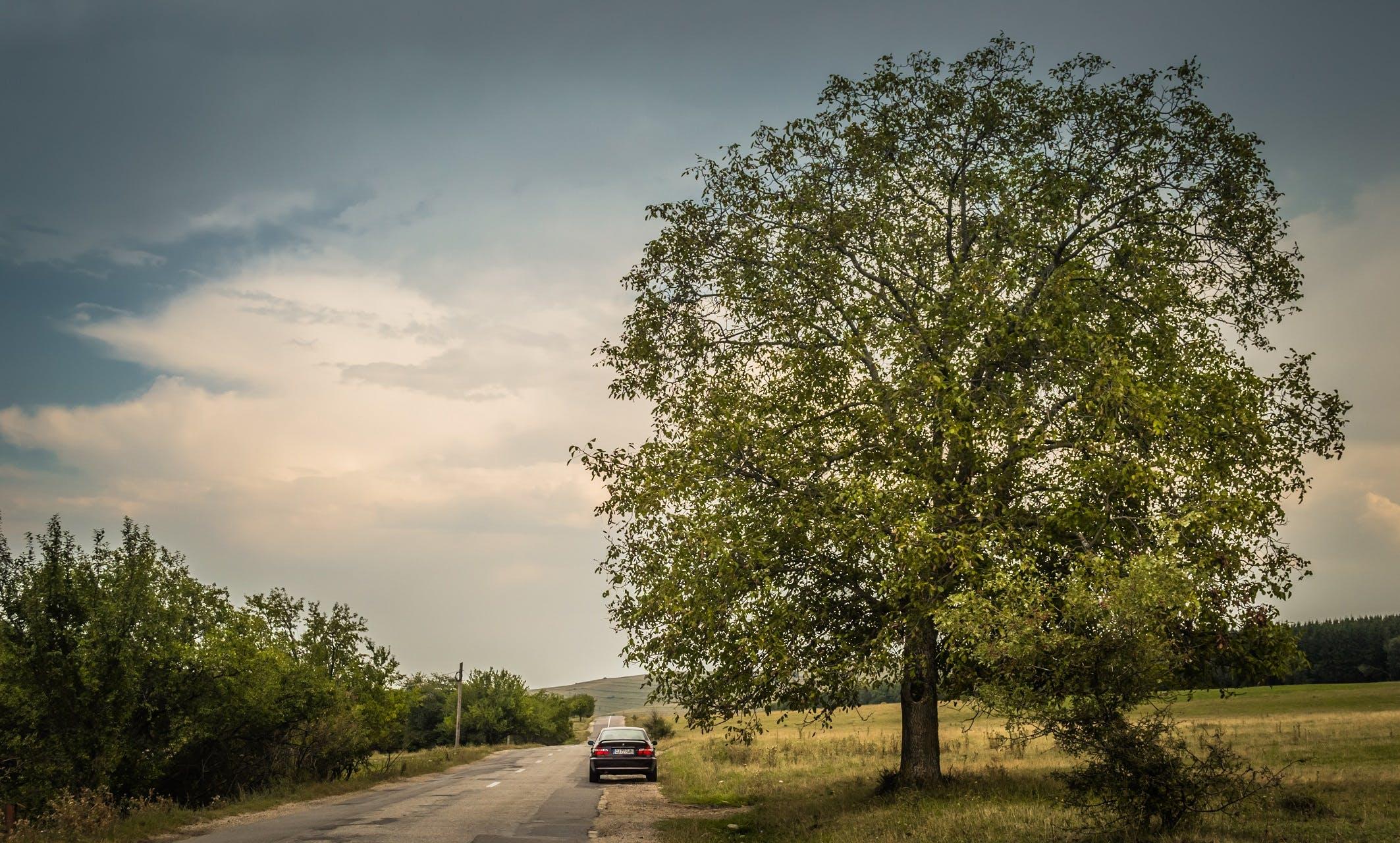 Free stock photo of adventure, beautiful view, big tree, car