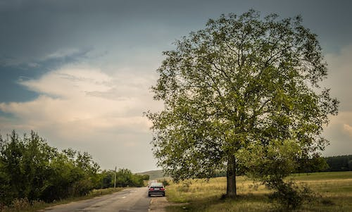 Free stock photo of adventure, big tree, car, clouds