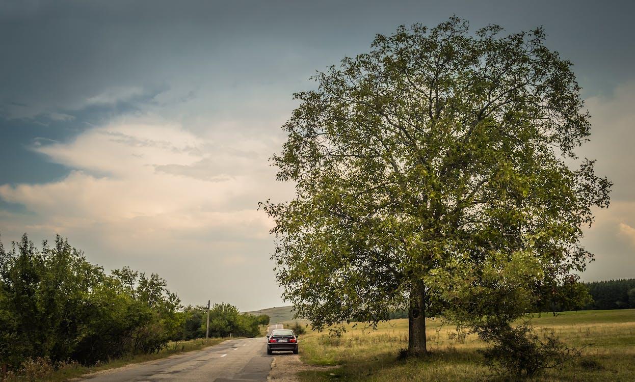 Gratis lagerfoto af bil, eventyr, landskab