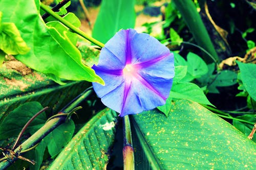 Photos gratuites de #fleur, #fleurs, #fleurs bleues