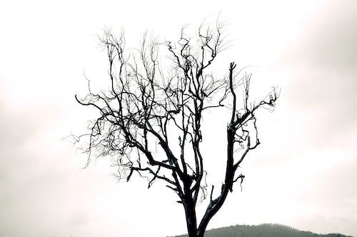 Photos gratuites de #autumntree, #treetatoos, noir et blanc