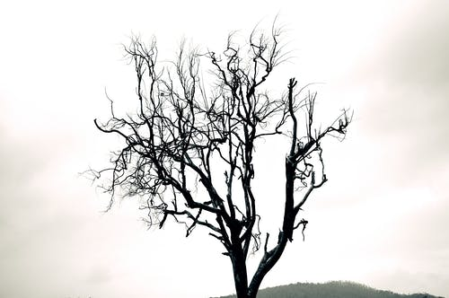 #autumntree, #treetatoos, 블랙 앤 화이트의 무료 스톡 사진