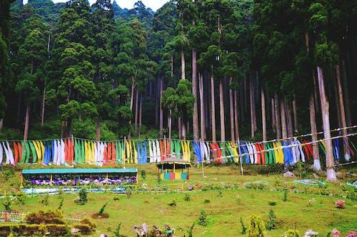 #숲의 무료 스톡 사진