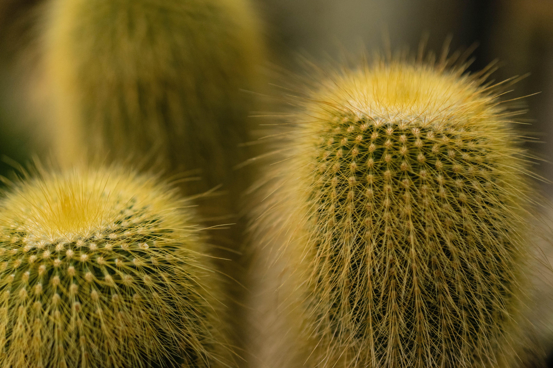 bitki, dikenler, dikenli, kaktüs içeren Ücretsiz stok fotoğraf