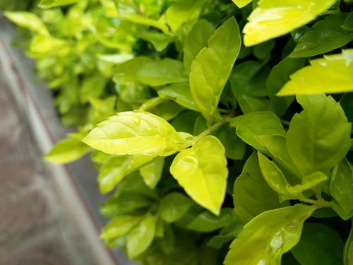 Fotobanka sbezplatnými fotkami na tému rastliny, zelený list