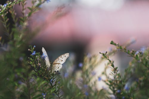 White and Black Butterfly Perched on Green Plant in Close Up Photography