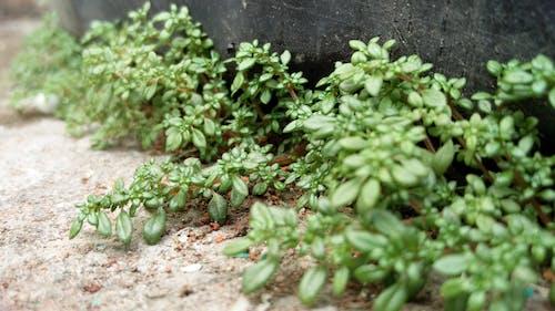 修剪花草, 地面, 增長, 夏天 的 免费素材照片