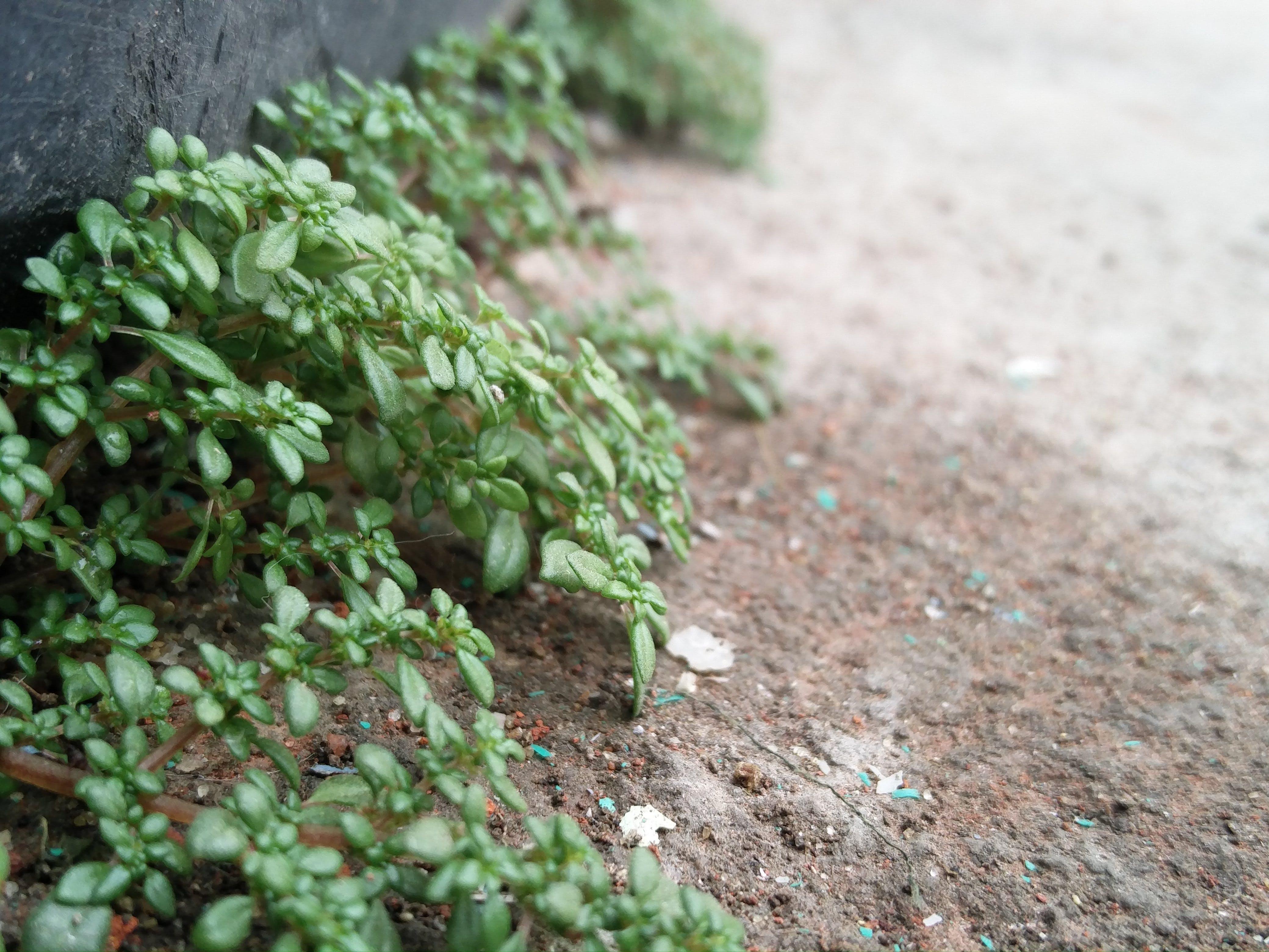 Free stock photo of macro photo, macro photography, plant