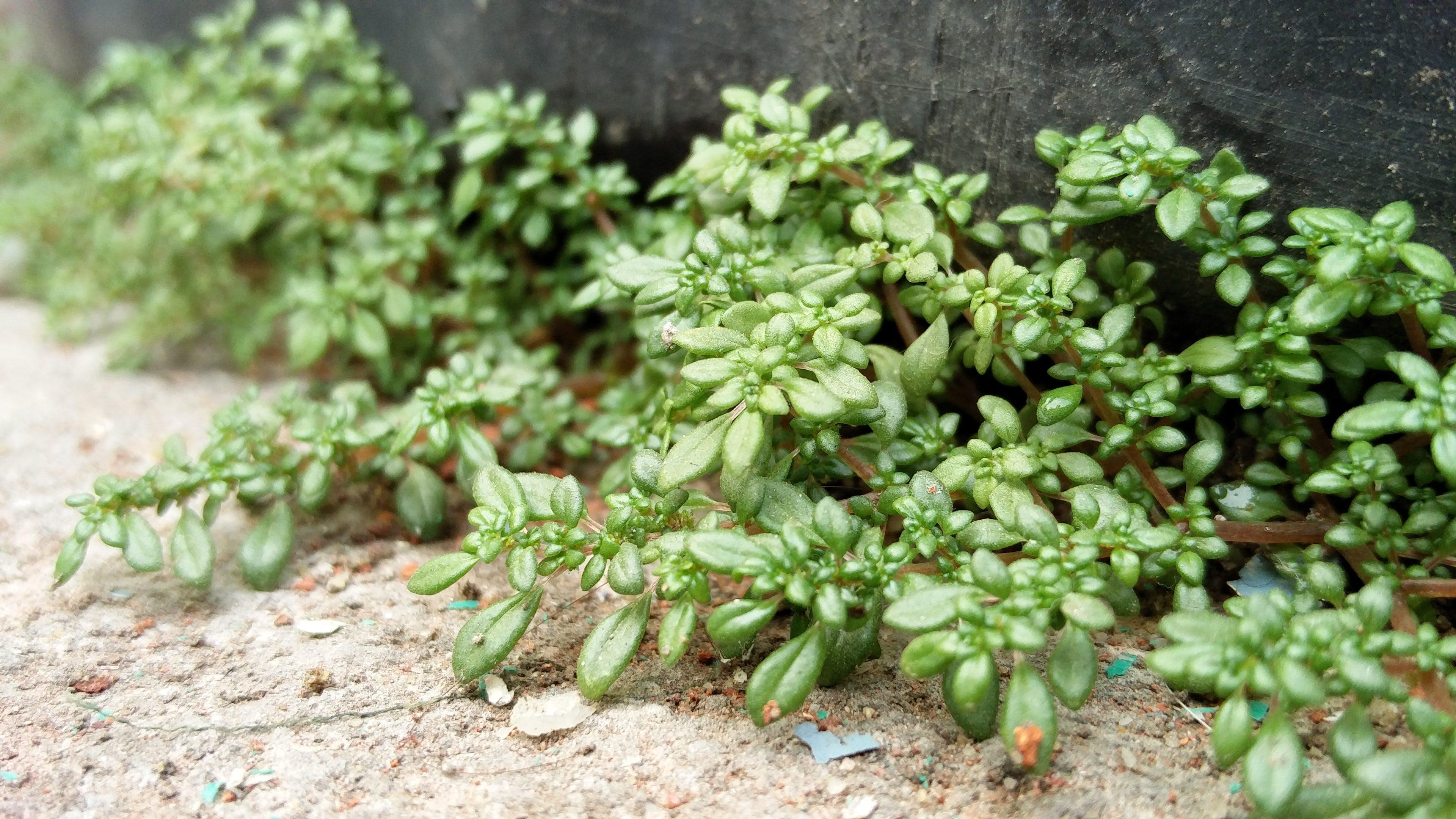Free stock photo of macro photo, plant