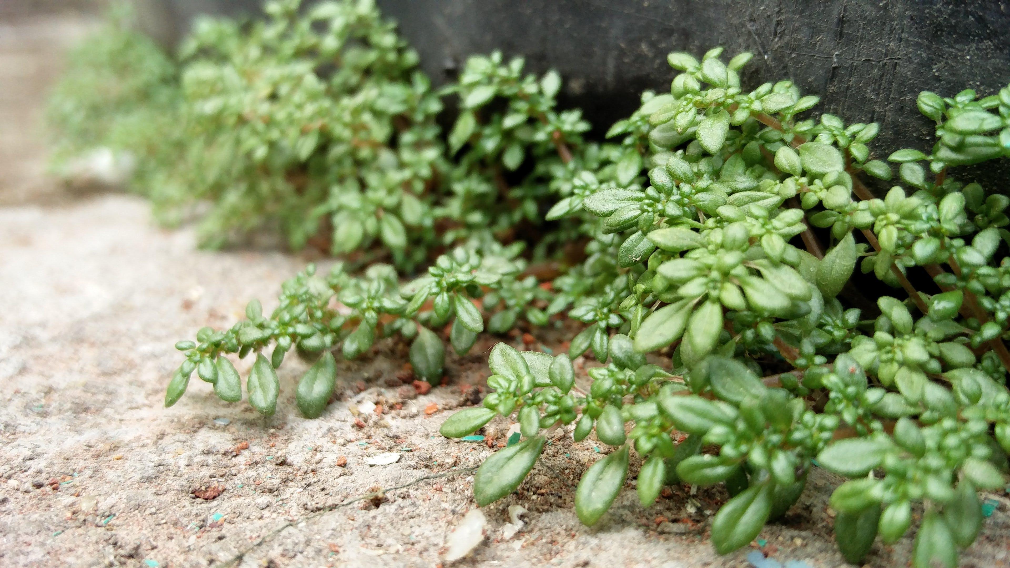 Free stock photo of leaf, macro photo, plant