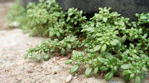 Fotobanka sbezplatnými fotkami na tému rastlina