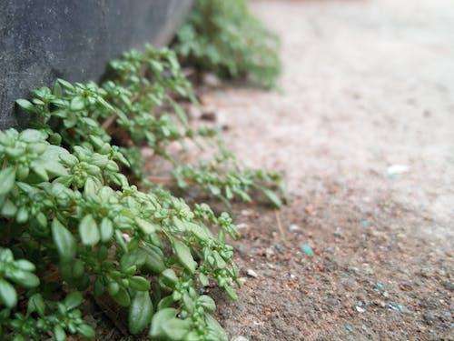 Fotobanka sbezplatnými fotkami na tému makrofotografia, rastlina