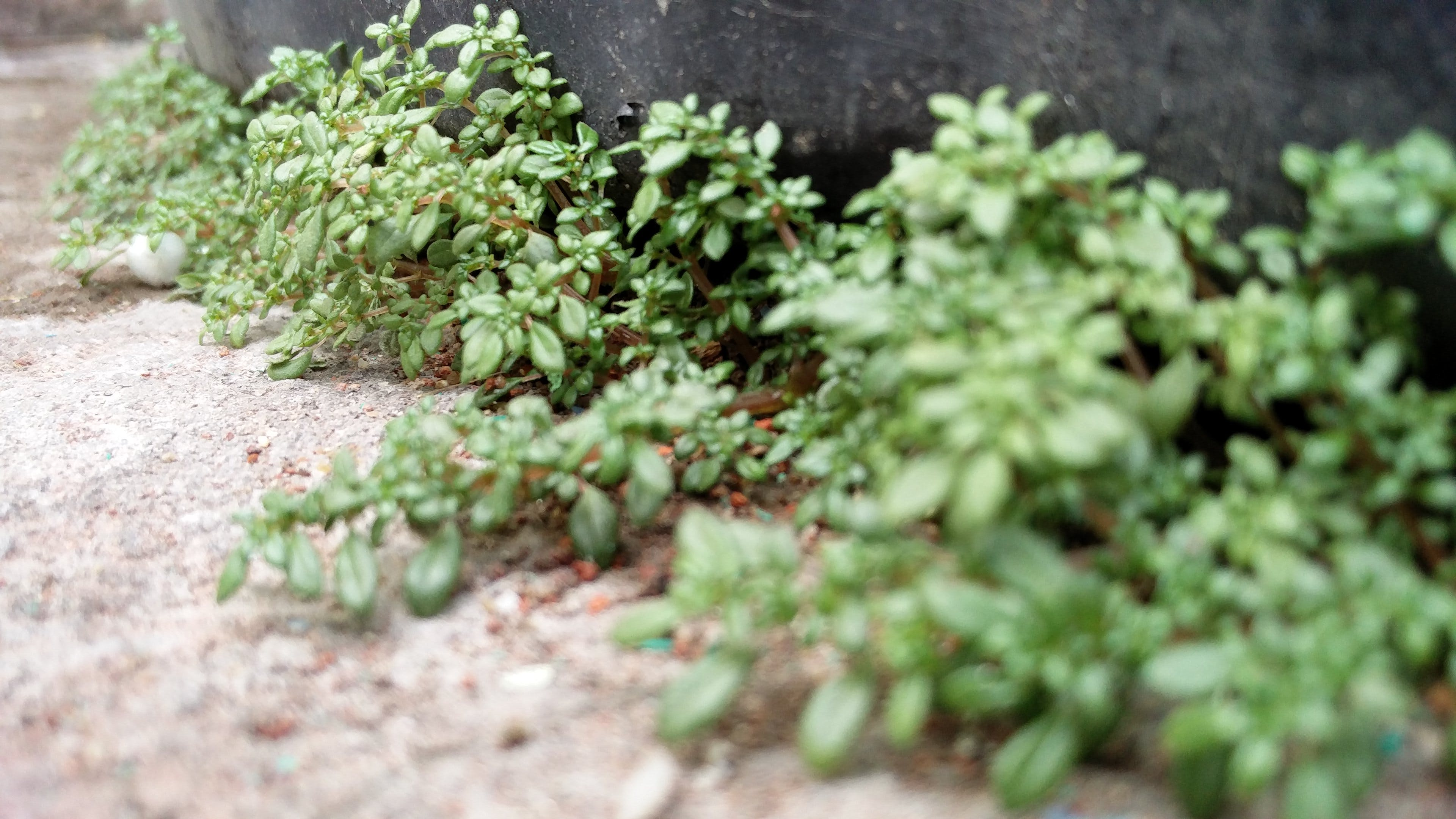 Free stock photo of leaf, macro photography, plants