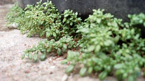 Fotobanka sbezplatnými fotkami na tému makrofotografia, rastliny