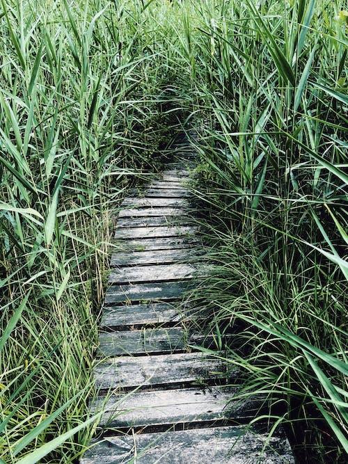 Brown Wooden Pathway Between Green Grass