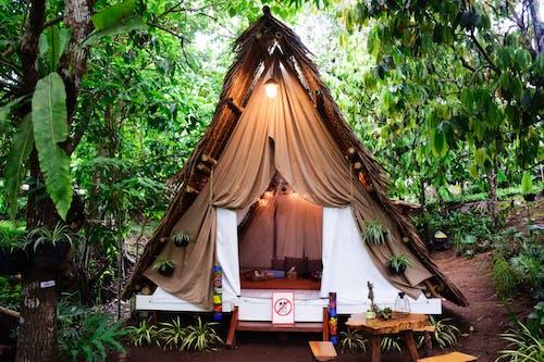 Gratis stockfoto met boho stijl, bomen, camping