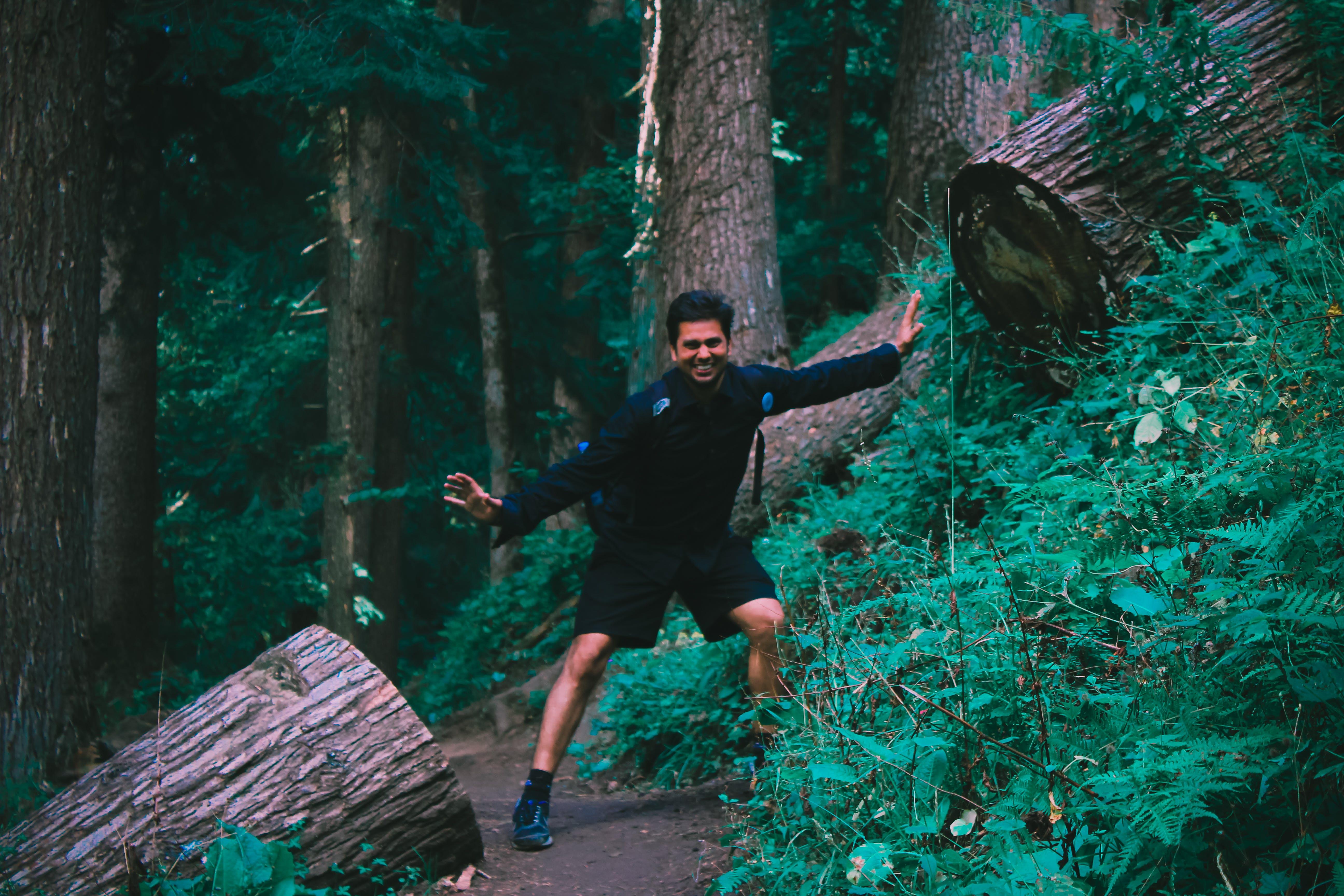 zu ausflug, bäume, berg, dunkel