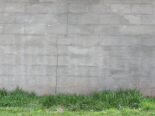 Безкоштовне стокове фото на тему «зелений, сірий, Стіна»