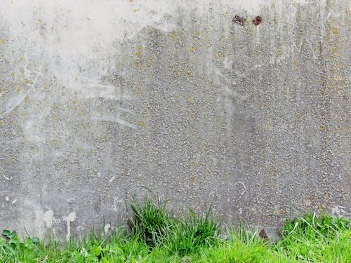 Безкоштовне стокове фото на тему «сірий, Стіна, трава»
