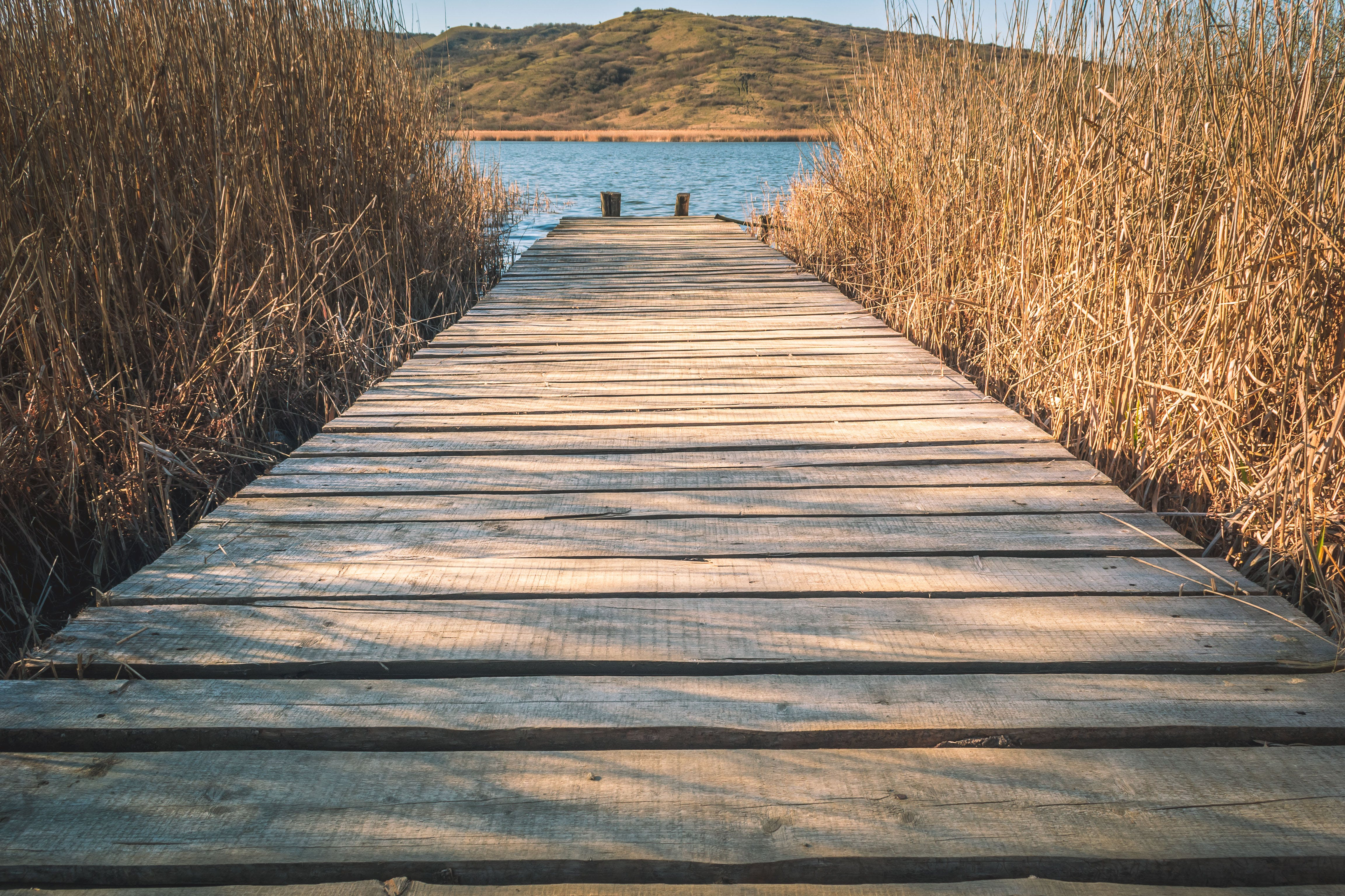 Brown Wooden Dock With Brown Grasses