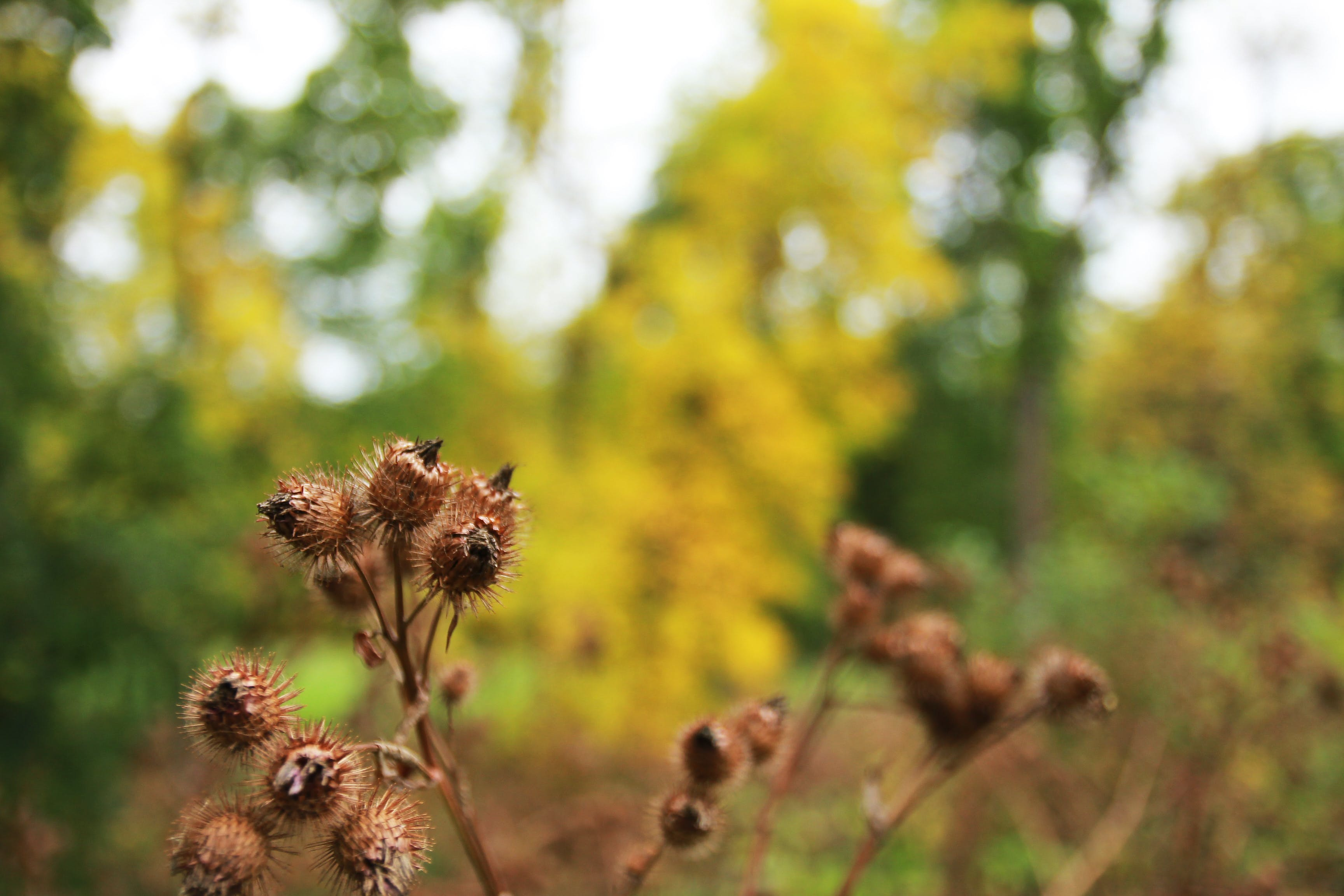 Selective Focus of Brown Fruits Photography