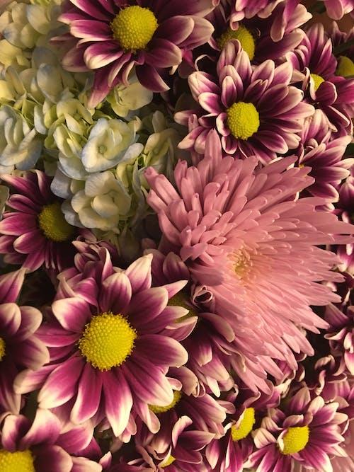 Kostenloses Stock Foto zu blume, blumen, lila, lila blüten