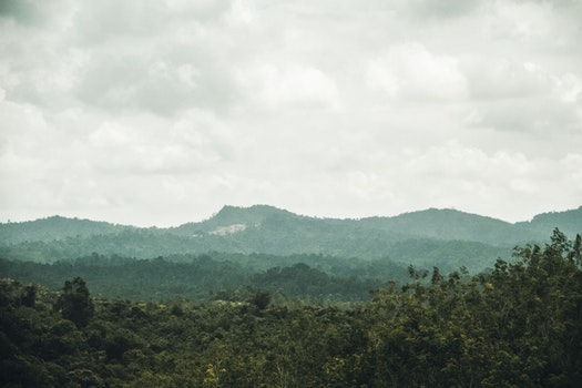 Free stock photo of forest, green, virgin jungle