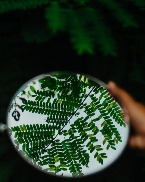 White and Green Round Ornament