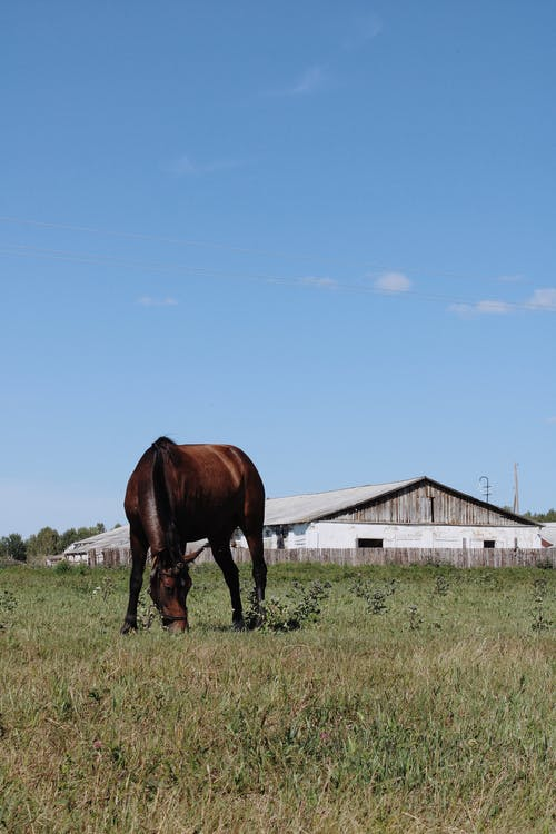 Free stock photo of agriculture, cavalry, countryside