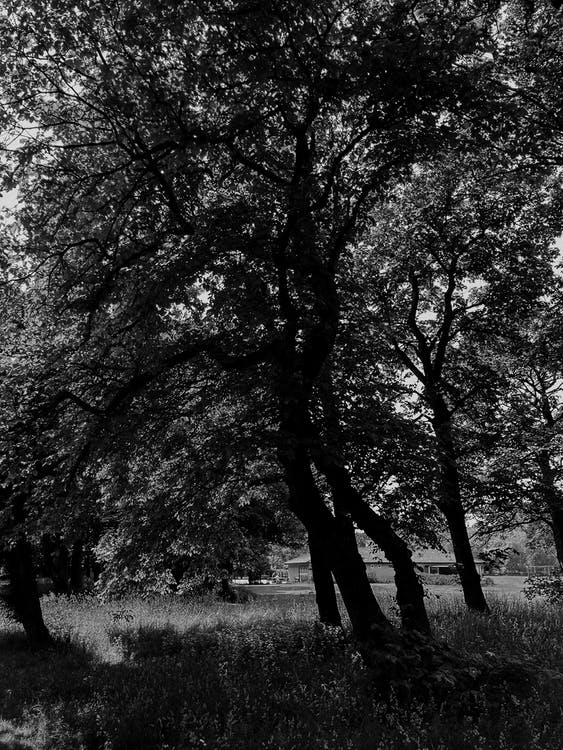 Fotos de stock gratuitas de amanecer, árbol, bañador