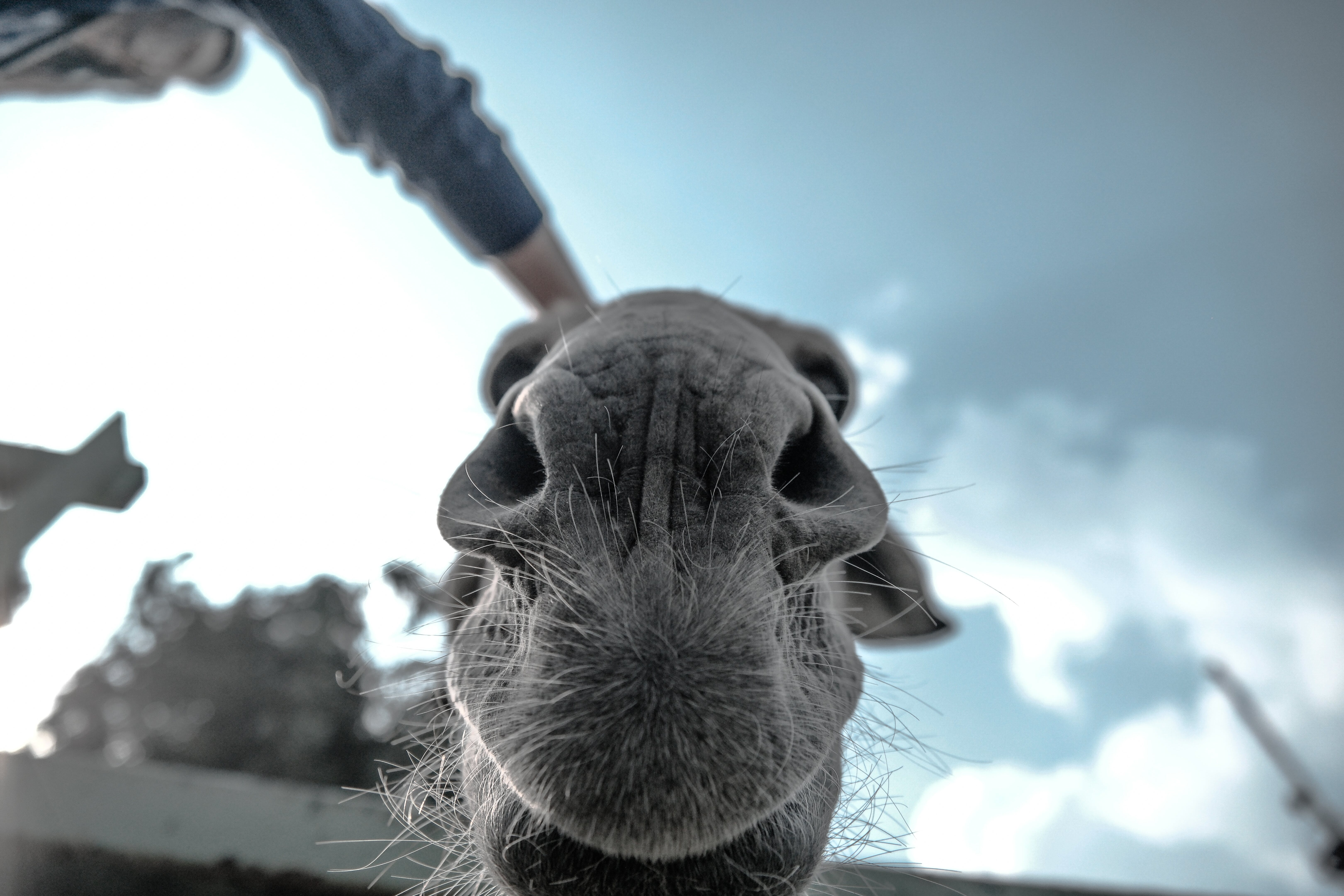 Grey Animal in Grray Scale Photo