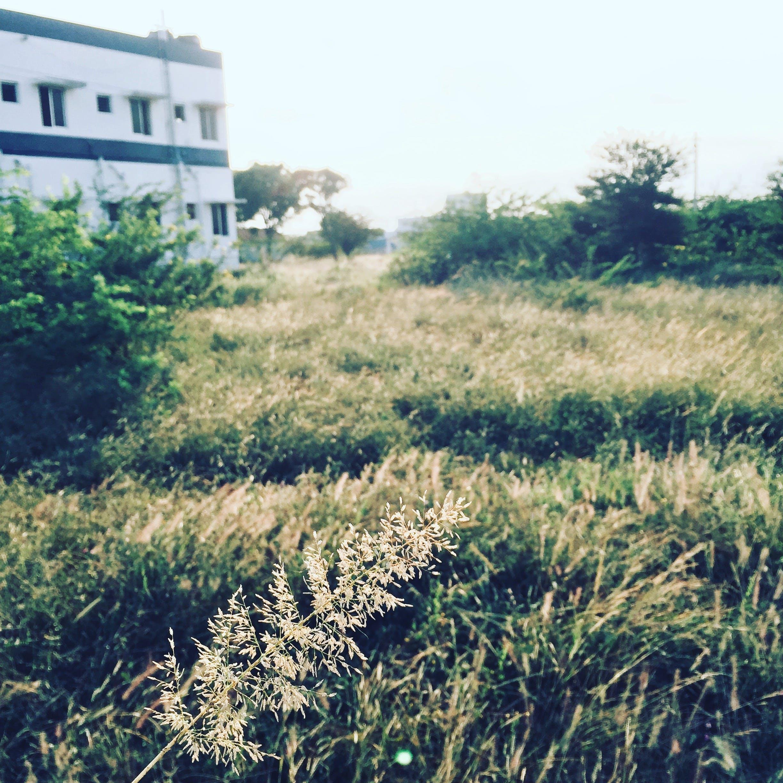 Foto d'estoc gratuïta de a pagès, camp, edifici, estiu