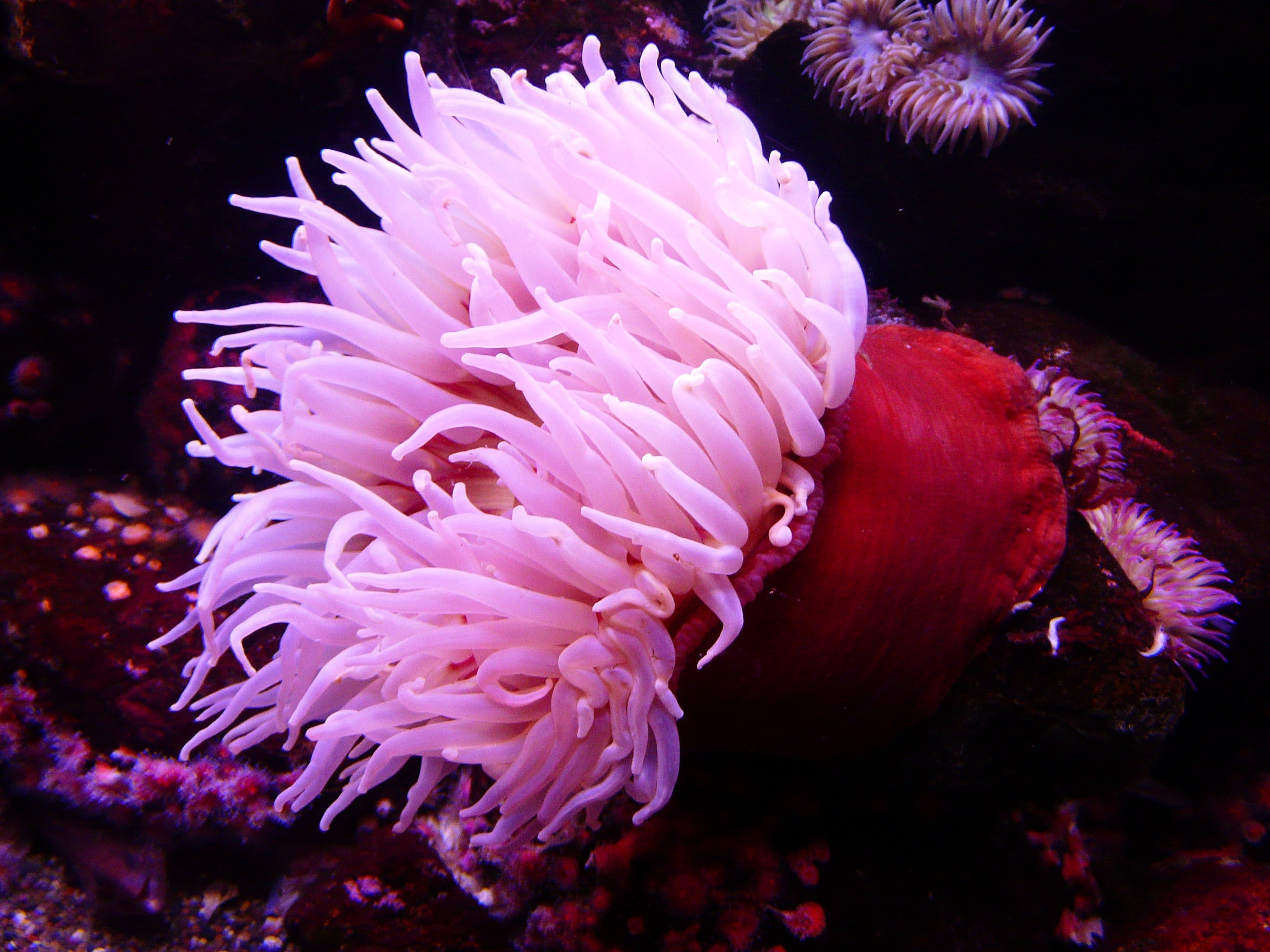 Pink and Red Seaweeds