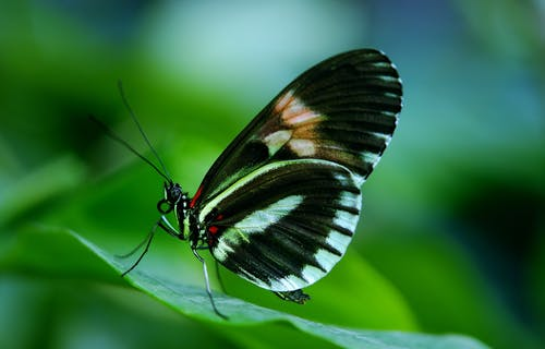 Black and White Butterfly on Green Leaf during Daytime