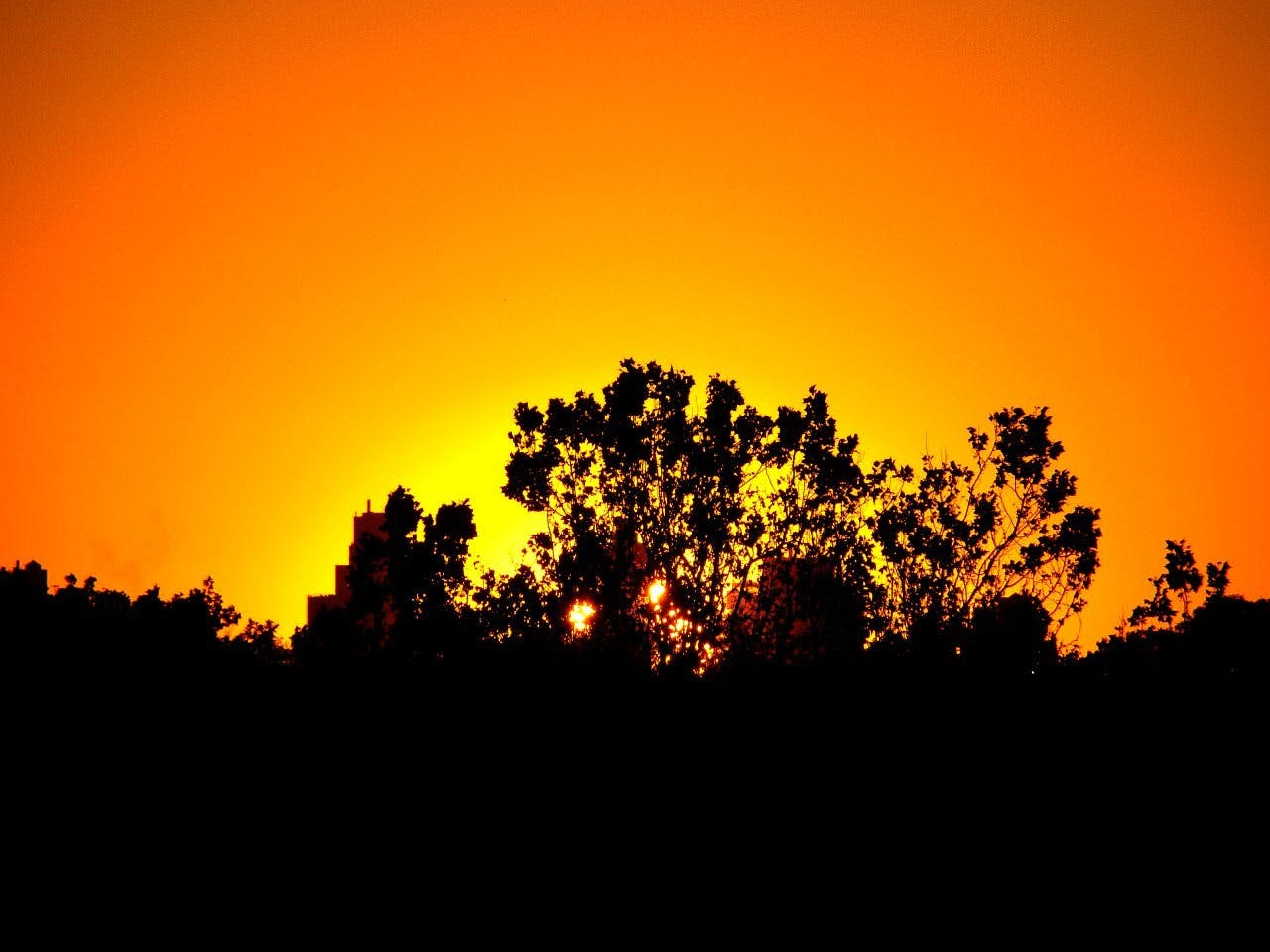 Free stock photo of sky, sunset, trees, silhouette