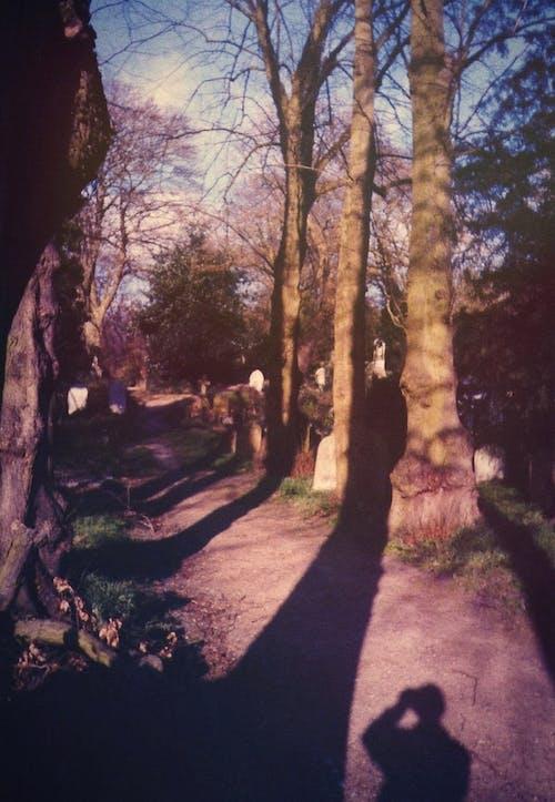 Foto stok gratis alam, bayangan, daerah pedesaan