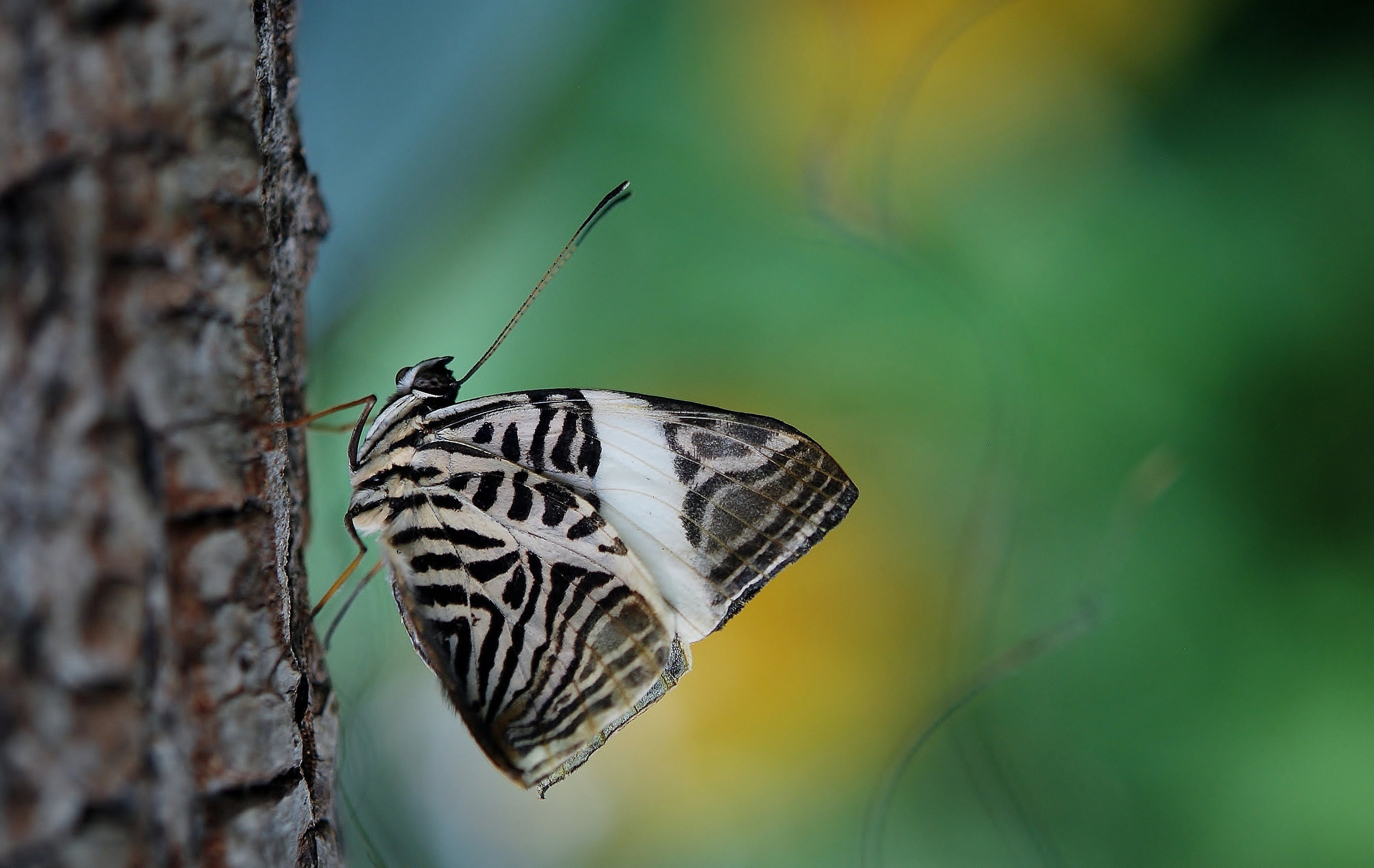 Selective Focus Photography White and Black Moth on Tree Bark
