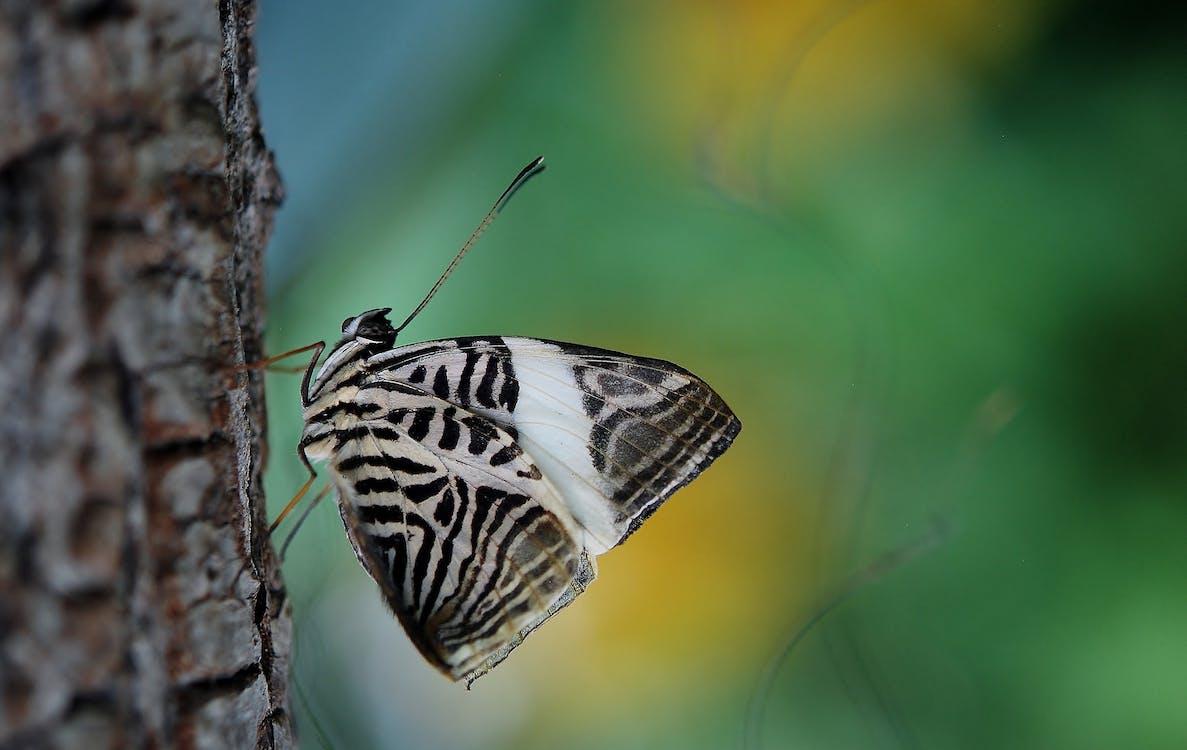 γκρο πλαν, έντομο, κοντινό πλάνο