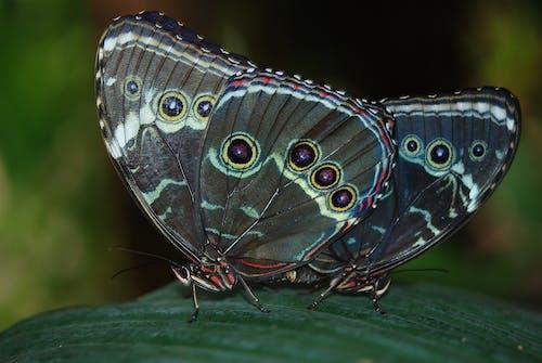 böcekler, bulanıklık, çift, desenler içeren Ücretsiz stok fotoğraf