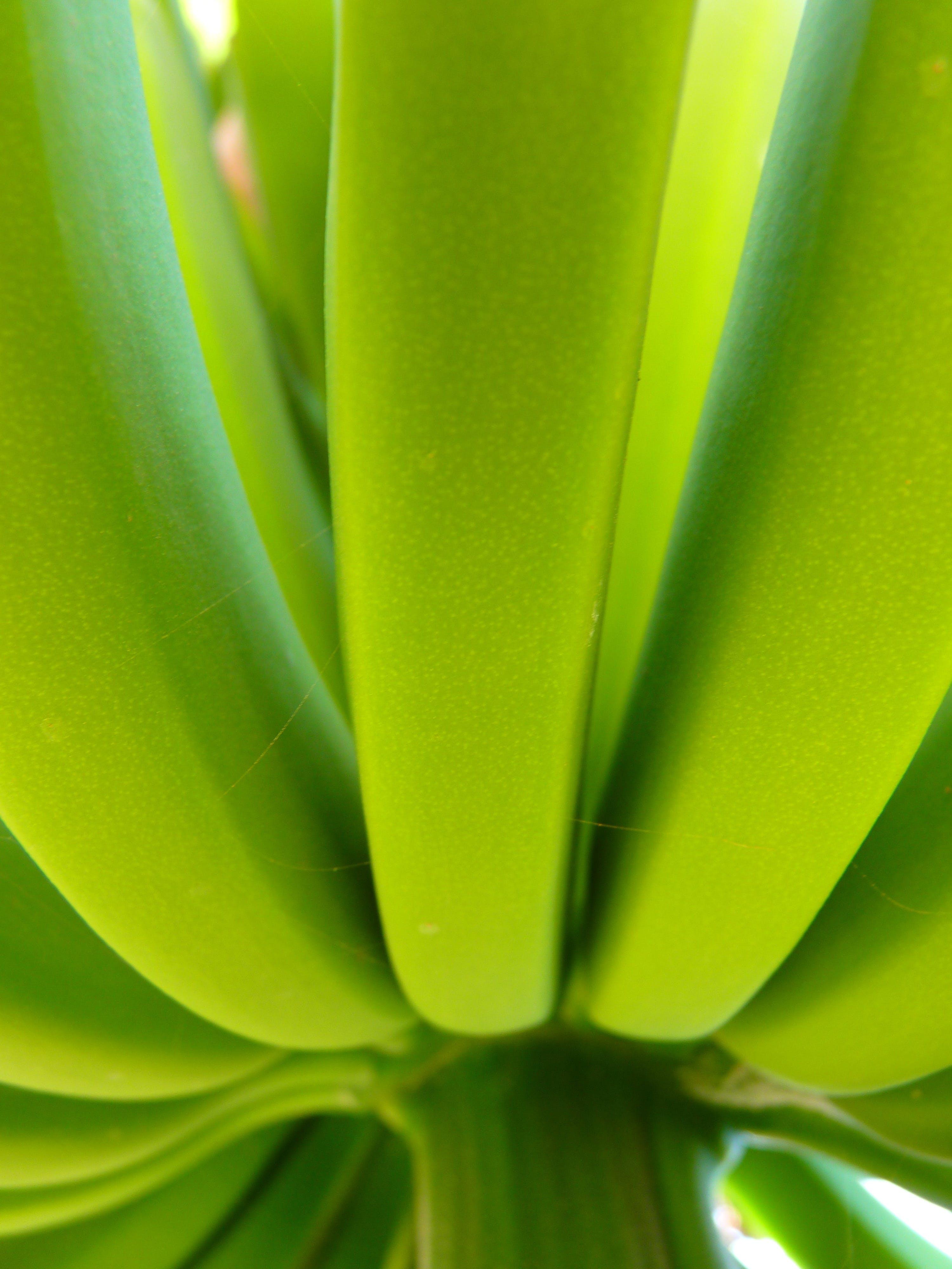 Free stock photo of food, plant, green, banana