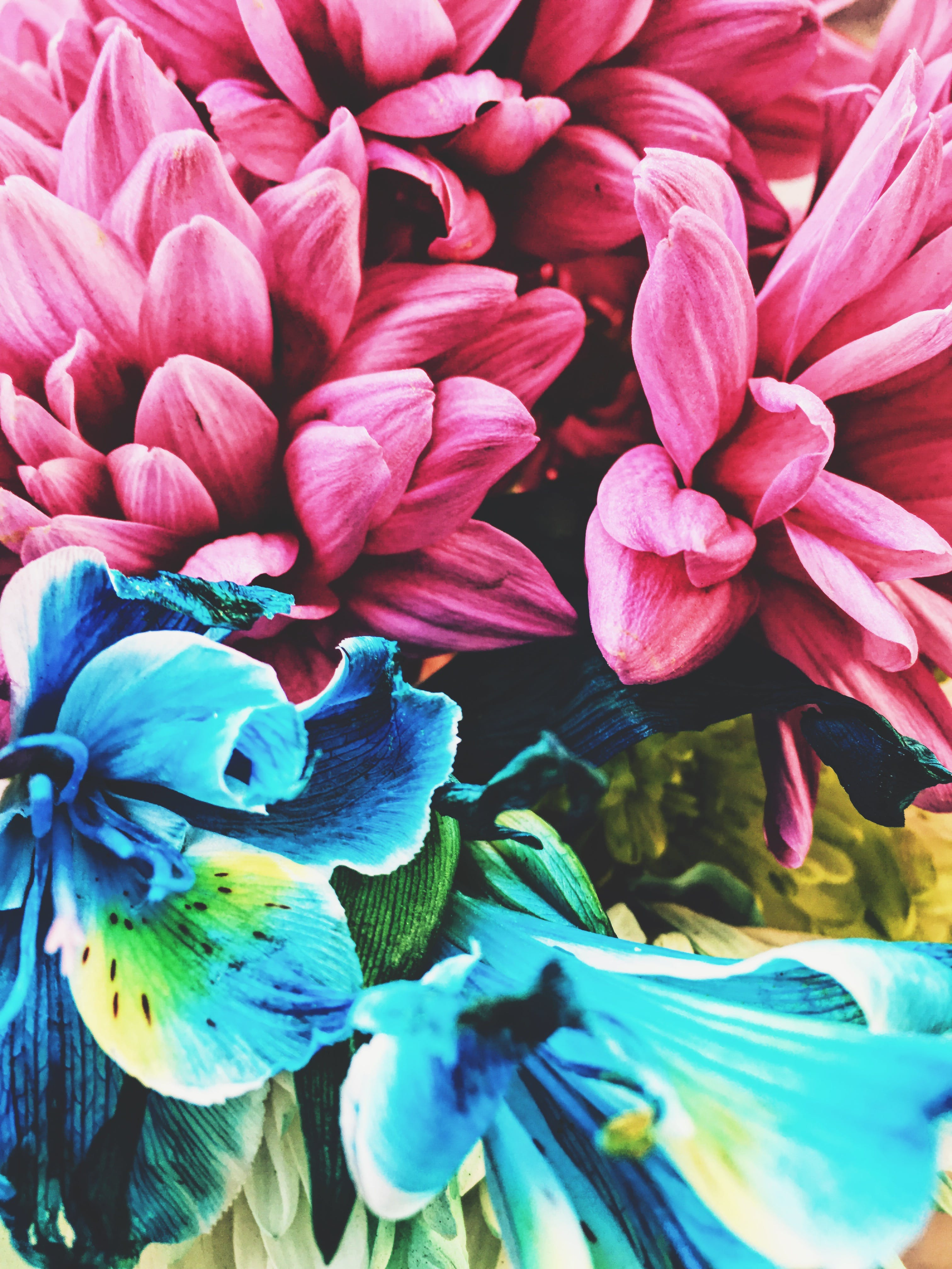 Free stock photo of artificial flowers, beautiful flowers, mobilechallenge