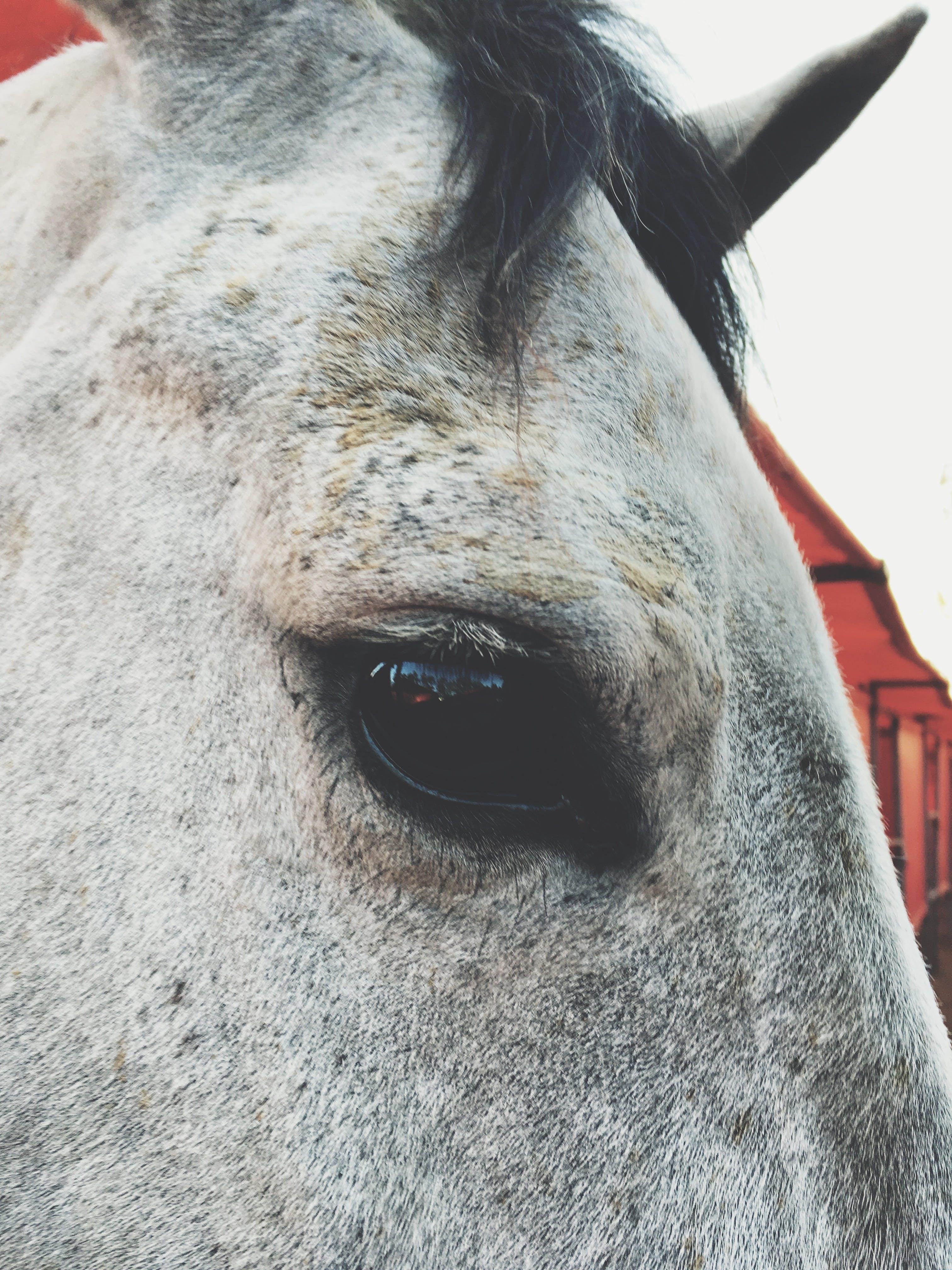 Kostenloses Stock Foto zu mobilechallenge, pferd, tier