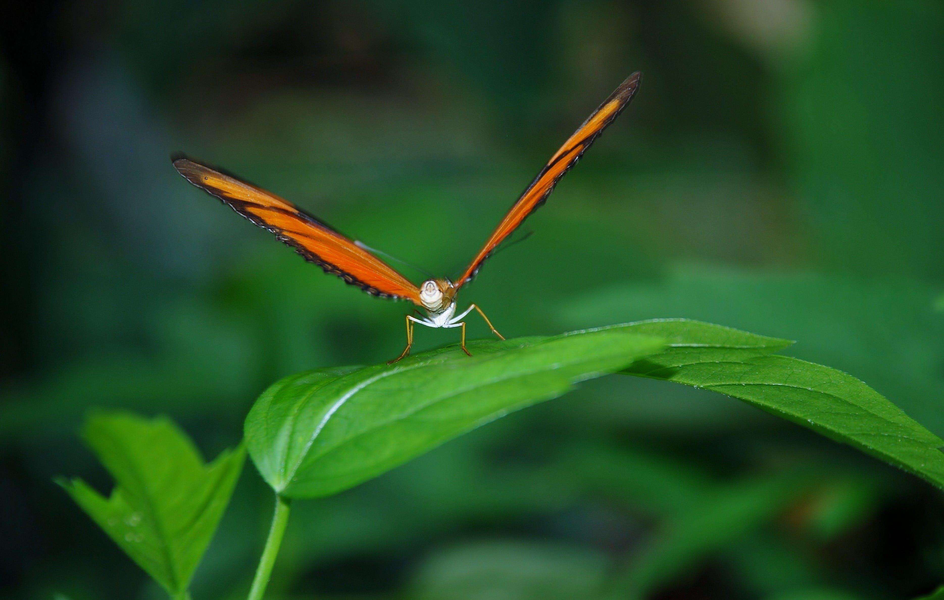 Gratis lagerfoto af insekt, makro, natur, plante