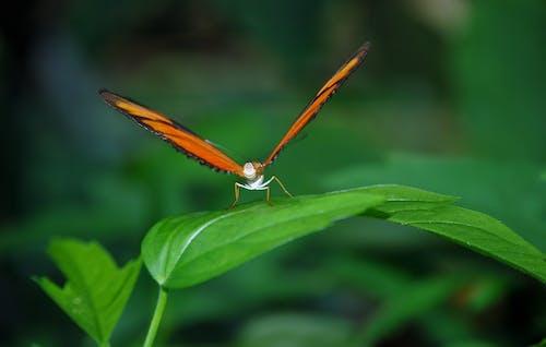 Δωρεάν στοκ φωτογραφιών με macro, έντομο, εργοστάσιο, πεταλούδα