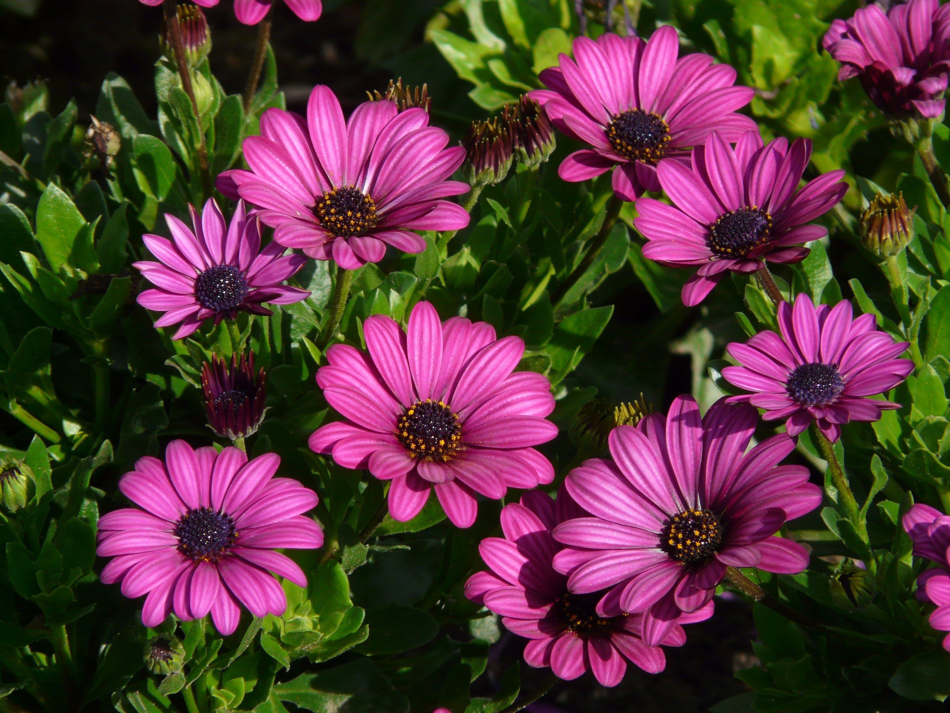 Purple Petal Flowers during Daytime